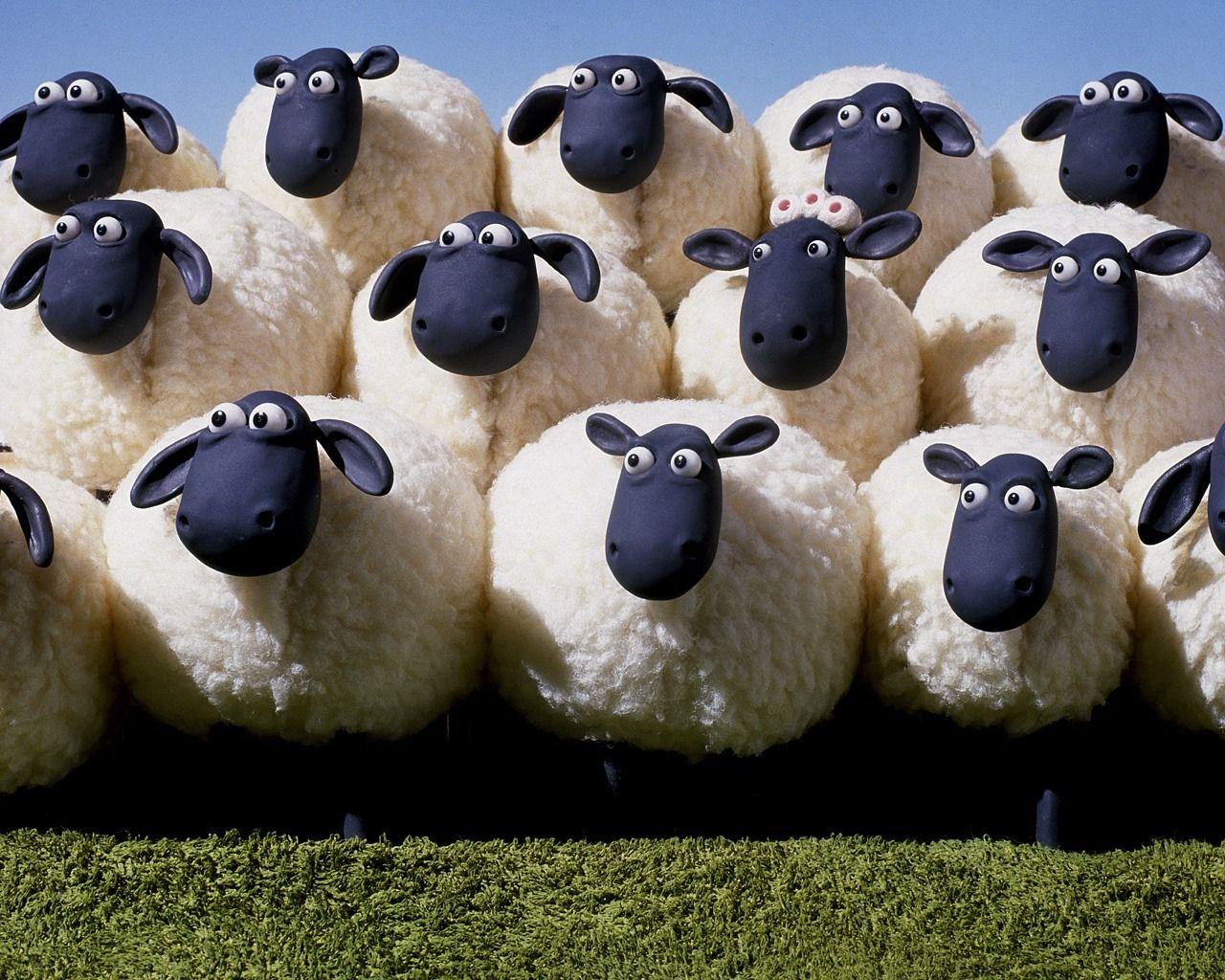 овечки из группы поддержки тринадцатого стада